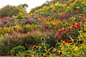 ASTON POTTERY, OXFORDSHIRE: HILLSIDE, SEPTEMBER - DAHLIAS, CANNAS, SALVIAS, CROCOSMIA, HELIANTHUS LEMON QUEEN, PERENNIALS, HOT COLOURS, YELLOW, RED, FLOWERING, FLOWERS