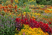 ASTON POTTERY, OXFORDSHIRE: ANNUAL BORDER IN SEPTEMBER. AMARANTHUS HOT BISCUITS, CELOSIA SCARLET PLUME, TITHONIA, TAGETES TANGERINE GEM. ANNUALS, BORDERS