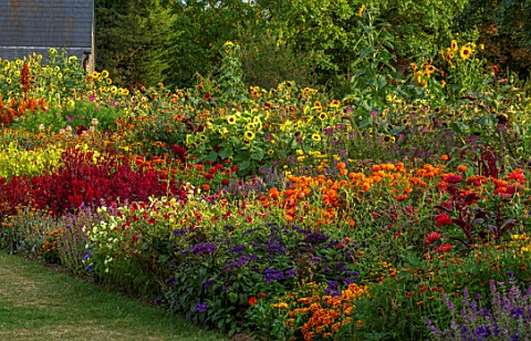 ASTON_POTTERY_OXFORDSHIRE_ANNUAL_BORDER_IN_SEPTEMBER_AMARANTHUS_HOT_BISCUITS_CELOSIA_SCARLET_PLUME_N