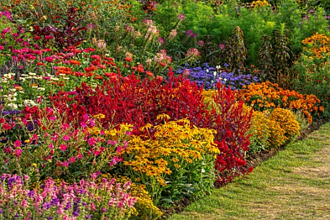 ASTON_POTTERY_OXFORDSHIRE_ANNUAL_BORDER_IN_SEPTEMBER_NICOTIANA_ZINNIAS_RUDBECKIA_IRISH_EYES_CELOSIA_