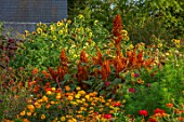 ASTON POTTERY, OXFORDSHIRE: ANNUAL BORDER IN SEPTEMBER. AMARANTHUS HOT BISCUITS, MARIGOLDS, COSMOS, SUNFLOWERS, HELIANTHUS, ANNUALS, BORDERS