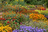 ASTON POTTERY, OXFORDSHIRE: ANNUAL BORDER IN SEPTEMBER. CELOSIA GOLDEN PLUME, TAGETES, TITHONIA, AGERATUM, SUNFLOWERS, TAGETES BURNING EMBERS, ANNUALS, BORDERS