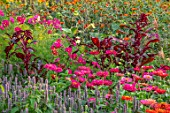 ASTON POTTERY, OXFORDSHIRE: ANNUAL BORDER IN SEPTEMBER. ZINNIA STATE FAIR, AGASTACHE LIQUIRICE, AMARANTHUS FOX TAIL , ANNUALS, BORDERS