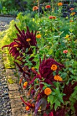 MORTON HALL GARDENS, WORCESTERSHIRE: KITCHEN GARDEN, POTAGER, CUTTING, AMARANTHUS PYGMY TORCH, ZINNIA ELEGANS SPRITE MIX, ORANGE, RED, FLOWERS, BORDERS, LATE SUMMER