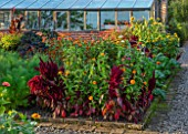 MORTON HALL GARDENS, WORCESTERSHIRE: KITCHEN GARDEN, POTAGER, CUTTING, AMARANTHUS PYGMY TORCH, ZINNIA ELEGANS SPRITE MIX, ORANGE, RED, FLOWERS, SUNFLOWERS, FENNEL