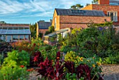 MORTON HALL GARDENS, WORCESTERSHIRE: KITCHEN GARDEN, POTAGER, CUTTING, AMARANTHUS PYGMY TORCH, TITHONIA, ORANGE, RED, FLOWERS, SUNFLOWERS, FENNEL