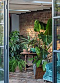 HORSE SHOE BEND, LONDON. DESIGNER MARTHA KREMPEL: INDOOR CORRIDOR WITH HOUSEPLANTS: STRELITZIA, HOWEA FOSTERIANA, ALOES, PILEA, INDOOR FERN, SETTEE