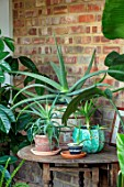 HORSE SHOE BEND, LONDON. DESIGNER MARTHA KREMPEL: INDOOR CORRIDOR WITH HOUSEPLANTS: STRELITZIA, HOWEA FOSTERIANA, ALOES, PILEA, INDOOR FERN, CONTAINERS