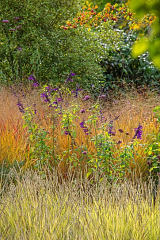 RADCOT_HOUSE_OXFORDSHIRE_BORDER_IN_THE_POOL_ROOM_SESLERIA_AUTUMNALIS_SALVIA_AMISTAD_IMPERATA_CYLINDR