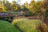 RADCOT HOUSE, OXFORDSHIRE: PAVILION AREA, BORDER BESIDE GRASS PATH: SESLERIA AUTUMNALIS, LATE, SUMMER, BORDERS