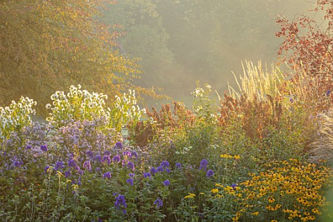 PETTIFERS_GARDEN_OXFORDSHIRE_AUTUMN_BORDER_ACONITUM_ARENDSII_CARMICHAELII_AND_ROYAL_FLUSH_ASTER_LAEV