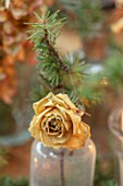 GIBBONS CROFT, WEST CLANDON, SURREY: CHRISTMAS DECORATION ON TABLE. DRIED CREAM ROSE WITH FIR SPRIG IN VINTAGE GLASS BOTTLE