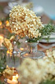 GIBBONS CROFT, WEST CLANDON, SURREY: CHRISTMAS DECORATION ON TABLE. DRIED CREAM HYDRANGEA WITH FIR SPRIG IN VINTAGE GLASS BOTTLE