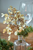 SPRINGFIELDS HOUSE, WEST CLANDON, SURREY: CHRISTMAS DECORATION ON TABLE. DRIED CREAM HYDRANGEA WITH FIR SPRIG IN VINTAGE GLASS BOTTLE