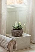 AMANDA KNOX HOUSE GRANTHAM: CHRISTMAS, LIVING ROOM: TABLE WITH BASKET, CONTAINER OF HELLEBORES, CHRISTMAS ROSE, INDOOR, FLOWERS, PLANTS, HOUSEPLANTS