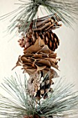 AMANDA KNOX HOUSE GRANTHAM: CHRISTMAS, LIVING ROOM, CHRISTMAS TREE, DECORATIONS, PINE CONES, CINNAMON STICKS