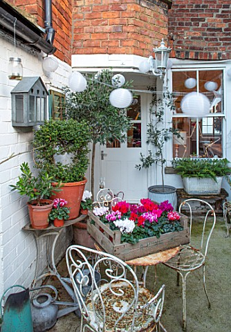 AMANDA_KNOX_HOUSE_GRANTHAM_BACKDOOR_PATIO_CHRISTMAS_PINK_CYCLAMEN_ON_TABLE_CHAIRS