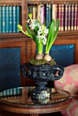 MARBURY HALL, SHROPSHIRE: DESIGNER SOFIE PATON-SMITH - THE LIBRARY, RED, CHRISTMAS, WHITE HYACINTH IN BLACK CONTAINER