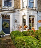 BUTTER WAKEFIELD HOUSE, LONDON: CHRISTMAS - HEDGING AND HYDRANGEAS - FRONT GARDEN, FRONT OF HOUSE, WREATH ON DOOR