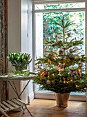 MERRYWOOD, JACKY HOBBS HOUSE, LONDON: HALL, CHRISTMAS TREE IN METAL BUCKET, NATURAL DECORATIONS, GLASS VASE WITH WHITE TULIPS, VINTAGE GARDEN TABLE