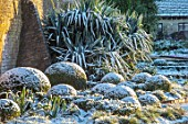 WAKEHURST, SUSSEX: THE WINTER GARDEN, JANUARY - SNOW ON BOX BALLS, MOUNDS, BUXUS, PATH, YUCCA FILAMENTOSA, GREEN, WHITE, SHRUBS