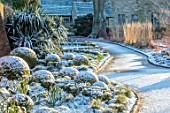 WAKEHURST, SUSSEX: THE WINTER GARDEN, JANUARY - SNOW ON BOX BALLS, MOUNDS, BUXUS, PATH, YUCCA FILAMENTOSA, GREEN, WHITE, SHRUBS, CALAMAGROSTIS KARL FOERSTER