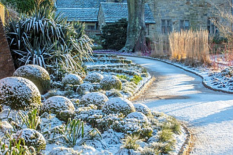 WAKEHURST_SUSSEX_THE_WINTER_GARDEN_JANUARY__SNOW_ON_BOX_BALLS_MOUNDS_BUXUS_PATH_YUCCA_FILAMENTOSA_GR