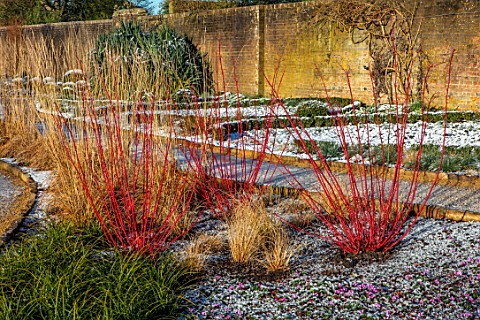 WAKEHURST_SUSSEX_THE_WINTER_GARDEN_JANUARY__PATH_SNOW_CORNUS_CYCLAMEN_CALAMAGROSTIS_KARL_FOERSTER