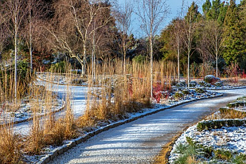 WAKEHURST_SUSSEX_THE_WINTER_GARDEN_JANUARY__PATH_SNOW_BETULA_BIRCH_CALAMAGROSTIS_KARL_FOERSTER