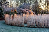 THE OLD RECTORY, QUINTON, NORTHAMPTONSHIRE: DESIGNER ANOUSHKA FEILER: FROST, WINTER, JANUARY, MZE OF CALAMAGROSTIS X ACUTIFLORA KARL FOERSTER, LAWN, GRASSES