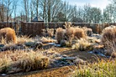 THE OLD RECTORY, QUINTON, NORTHAMPTONSHIRE: DESIGNER ANOUSHKA FEILER: GRASSES, FROST, WINTER, FROSTY GARDEN, HEDGES, STIPA CALAMAGROSTIS, PENNISETUM HAMELN, LIBERTIA CHILENSIS