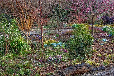 THE_PICTON_GARDEN_AND_OLD_COURT_NURSERIES_WORCESTERSHIRE_WINTER_GARDEN_BED__PRUNUS_MUME_BENI_CHIDORI