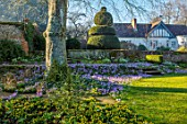 LITTLE COURT, HAMPSHIRE - ORCHARD IN FEBRUARY PLANTED WITH CROCUS TOMMASINIANUS, MEADOW, APPLE ORCHARD, NATURALIZED, BULBS, LAWN, GRASS, HOUSE, TOPIARY, ACONITES, ERANTHIS HYEMALIS