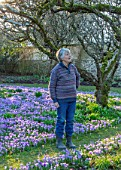 LITTLE COURT, HAMPSHIRE - PATRICIA ELKINGTON IN HER ORCHARD IN FEBRUARY. CROCUS TOMMASINIANUS, MEADOW, APPLE ORCHARD, NATURALIZED, BULBS, LAWN, GRASS