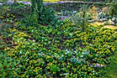 LITTLE COURT, HAMPSHIRE - LAWN, STEPPING STONES, STEPS, SNOWDROPS, ACONITES, ERANTHIS HYEMALIS, CROCUS TOMMASINIANUS, APPLE ORCHARD, NATURALIZED, BULBS, LAWN, GRASS, SHADE, SHADY
