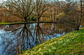 LITTLE MALVERN COURT, WORCESTERSHIRE: PRIMROSES AND DAFFODILS BESIDE THE LAKE, POND, POOL, BULBS, FLOWERING, SPRING, SHRUBS