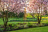 THE OLD VICARAGE, WORMLEIGHTON, WARWICKSHIRE: LAWN, PINK FLOWERS OF PRUNUS ACCOLADE, CHERRIES, EVENING, LIGHT, TREES, BLOSSOM, SPRING, GOLD ARMILLARY SPHERE, SCULPTURE