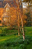 THE OLD VICARAGE, WORMLEIGHTON, WARWICKSHIRE: THE OLD RECTORY, LAWN, BETULA, BIRCHES, EVENING, LIGHT, SPRING