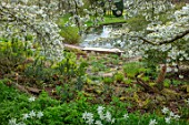 LITTLE MALVERN COURT, WORCESTERSHIRE: SPRING, EUPHORBIA, DAFFODILS, NARCISSUS TRESAMBLE, PRUNUS SHIROTAE, CHERRIES, CHERRY, TREES, APRIL, WHITE, BLOSSOMS, LAKE, WATER, BRIDGES