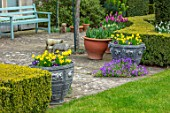 LITTLE MALVERN COURT, WORCESTERSHIRE: PATIO, BLUE WOODEN BENCH, SEAT, LEAD CONTAINERS, NARCISSUS TETE- A -TETE, BLUE PANSIES, LAWN, YEW HEDGES, HEDGING, TAXUS