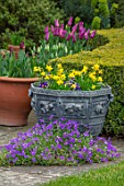 LITTLE MALVERN COURT, WORCESTERSHIRE: PATIO, LEAD CONTAINERS, NARCISSUS TETE- A -TETE, BLUE PANSIES, LAWN, YEW HEDGES, HEDGING, TAXUS, DAFFODILS