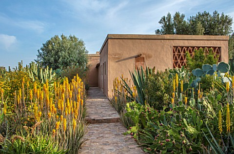 TAROUDANT_MOROCCO_DESIGNERS_ARNAUD_MAURIERES_AND_ERIC_OSSART_PATH_AGAVES_YELLOW_FLOWERED_ALOE_VERA_H
