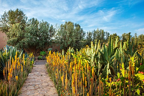 TAROUDANT_MOROCCO_DESIGNERS_ARNAUD_MAURIERES_AND_ERIC_OSSART_PATH_AGAVES_YELLOW_FLOWERED_ALOE_VERA_A