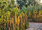 TAROUDANT, MOROCCO: DESIGNERS ARNAUD MAURIERES AND ERIC OSSART: PATH, AGAVES, YELLOW FLOWERED ALOE VERA, APRIL, DRY, ARID, SUCCULENTS