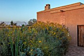 TAROUDANT, MOROCCO: DESIGNERS ARNAUD MAURIERES AND ERIC OSSART: FRONT GARDEN, HOUSE, YELLOW FLOWERS OF ENCELIA FARINOSA, ARID, DRY