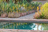 TAROUDANT, MOROCCO: DESIGNERS ARNAUD MAURIERES AND ERIC OSSART: SWIMMING POOL, BORDER WITH YELLOW FLOWERED ALOE VERA, CACTUS, CACTI, AGAVES, ARID, DRY, REFLECTIONS