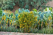TAROUDANT, MOROCCO: DESIGNERS ARNAUD MAURIERES AND ERIC OSSART: PATH, BORDER WITH YELLOW FLOWERED ALOE VERA, CACTUS, CACTI, AGAVES, ARID, DRY, REFLECTIONS