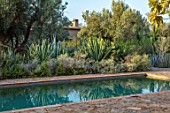 TAROUDANT, MOROCCO: DESIGNERS ARNAUD MAURIERES AND ERIC OSSART: SWIMMING POOL, GREEN BORDER, CACTUS, CACTI, AGAVES, ARID, DRY, REFLECTIONS