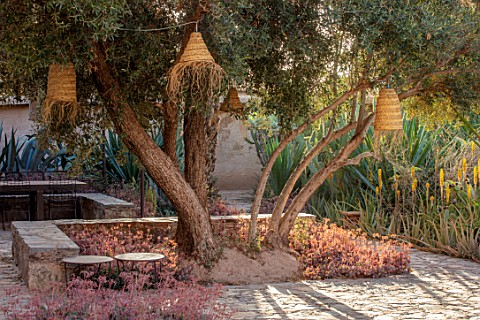 TAROUDANT_MOROCCO_DESIGNERS_ARNAUD_MAURIERES_AND_ERIC_OSSART_SEATING_AREA_WITH_AGAVES_OLIVE_TREE_LIG