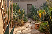 TAROUDANT, MOROCCO: DESIGNERS ARNAUD MAURIERES AND ERIC OSSART: PATH, YELLOW FLOWERS OF ALOE VERA, CACTUS, CACTI, ARID, DRY, BORDERS, SUCCULENTS